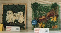 Silverhill Primary School Years 1 & 2 Well Dressings (1 - 2)