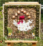 Additional Well Dressing (7)