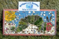 Bridgemont Nursery Well Dressing